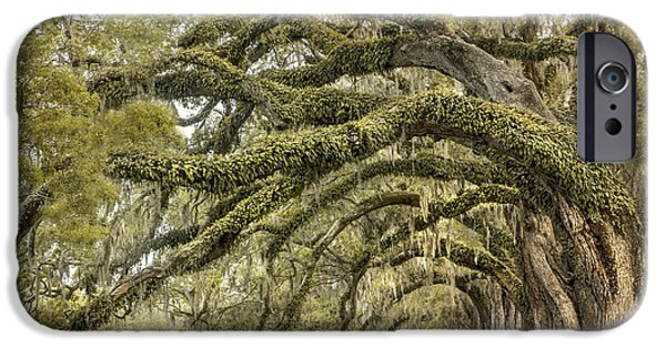 Live Oaks iPhone Cases - Avenue of Oaks iPhone Case by Magda  Bognar