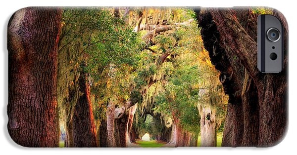 Constitution iPhone Cases - Avenue Of Oaks Sea Island Golf Club St Simons Island iPhone Case by Reid Callaway