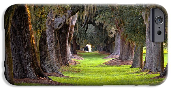 Constitution iPhone Cases - Avenue of the Oaks 4 on St Simons Island GA iPhone Case by Reid Callaway