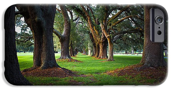 Constitution iPhone Cases - Avenue of the Oaks on St Simons Island GA iPhone Case by Reid Callaway
