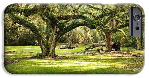 South Louisiana Photographs iPhone Cases - Avery Island Oaks iPhone Case by Scott Pellegrin