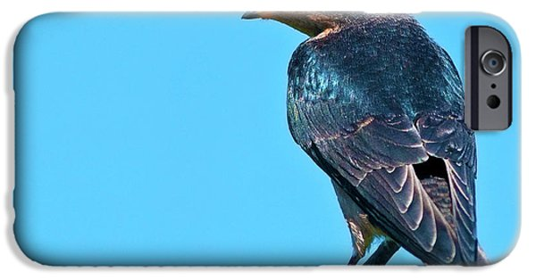 Barn Swallow iPhone Cases - Avian Blues... iPhone Case by Nina Stavlund