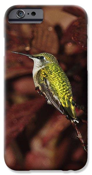 Birds iPhone Cases - Avian Gem 2 iPhone Case by Lara Ellis