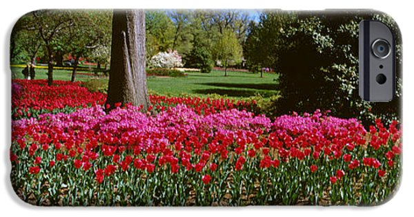 Generic iPhone Cases - Azalea And Tulip Flowers In A Park iPhone Case by Panoramic Images