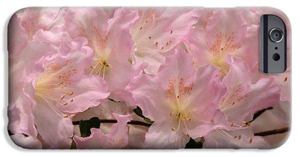 Botanical iPhone Cases - Azalea Beauty iPhone Case by Olivia Hardwicke
