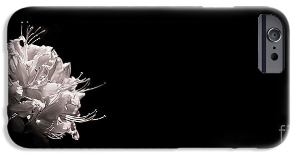 Black And White Florals iPhone Cases - Azalea Black and White Floral I iPhone Case by Holly Martin