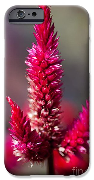 Garden Images iPhone Cases - B L O S S O M iPhone Case by Charles Dobbs