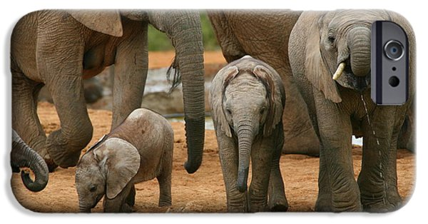 Addo iPhone Cases - Baby African Elephants iPhone Case by Bruce J Robinson