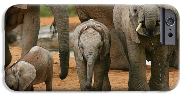 Addo iPhone Cases - Baby African Elephants II iPhone Case by Bruce J Robinson