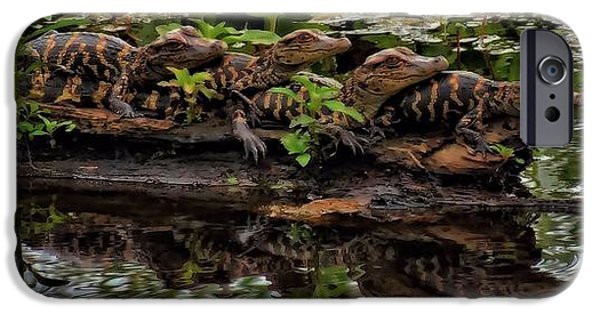 Reptiles iPhone Cases - Baby Alligators Reflection iPhone Case by Dan Sproul