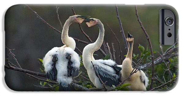Anhinga iPhone Cases - Baby Anhinga iPhone Case by Mark Newman