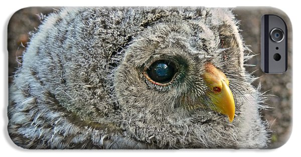 Baby Bird iPhone Cases - Baby Barred Owlet iPhone Case by Jennie Marie Schell