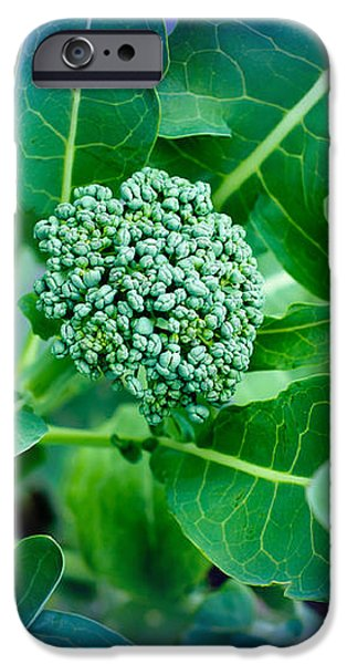 Baby Broccoli - Vegetable - Garden iPhone Case by Andee Design