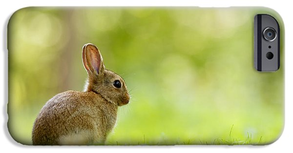 Young Photographs iPhone Cases - Baby Bunny in the Forest iPhone Case by Roeselien Raimond