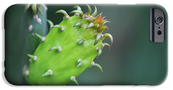 Macro iPhone Cases - Baby Cactus - Macro Photography By Sharon Cummings iPhone Case by Sharon Cummings