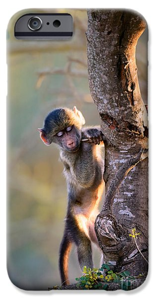 Little iPhone Cases - Baby Chacma climbing a tree iPhone Case by Johan Swanepoel