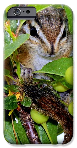 Barbara Chichester Digital iPhone Cases - Baby Chipmunk II iPhone Case by Barbara Chichester