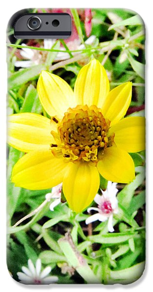 Michelle iPhone Cases - Baby Daisy iPhone Case by Michelle Milano