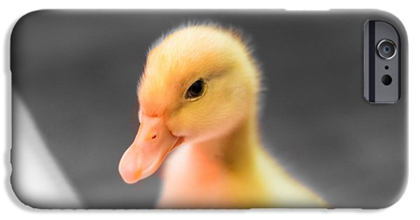 Albatross iPhone Cases - Baby Duckling - 2 iPhone Case by Shelby  Young