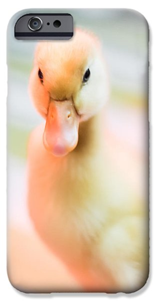 Albatross iPhone Cases - Baby Duckling iPhone Case by Shelby  Young