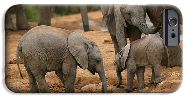Elephant iPhone Cases - Baby Elephant Gathering iPhone Case by Bruce J Robinson
