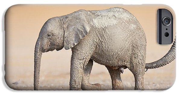 Tender iPhone Cases - Baby elephant  iPhone Case by Johan Swanepoel