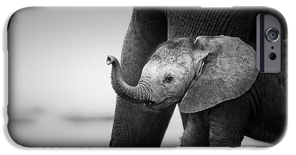 Elephants iPhone Cases - Baby Elephant next to Cow  iPhone Case by Johan Swanepoel