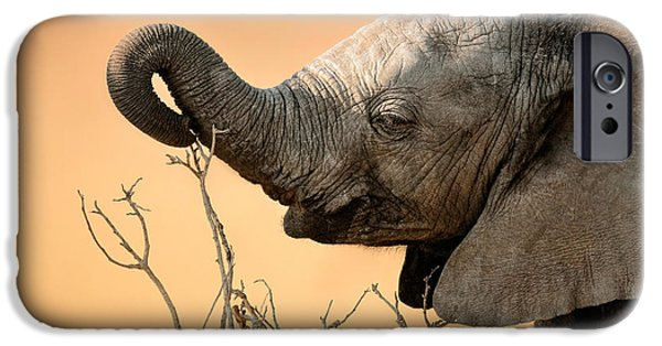 Young iPhone Cases - Baby elephant reaching for branch iPhone Case by Johan Swanepoel
