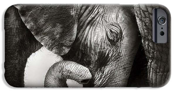Young iPhone Cases - Baby elephant seeking comfort iPhone Case by Johan Swanepoel