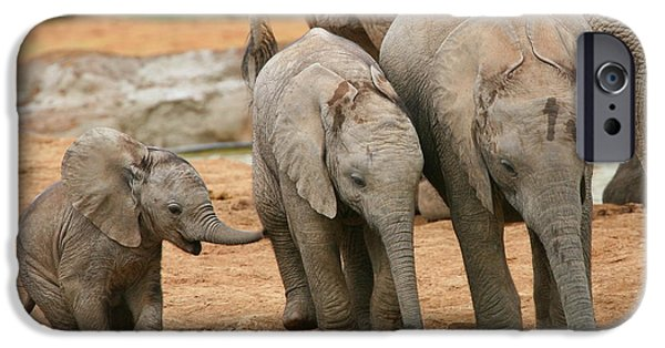 Addo iPhone Cases - Baby Elephant Trio iPhone Case by Bruce J Robinson
