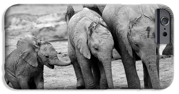 Addo iPhone Cases - Baby Elephant Trio BW iPhone Case by Bruce J Robinson