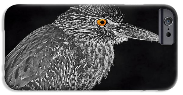 Fauna iPhone Cases - Baby Face 2 iPhone Case by HH Photography of Florida