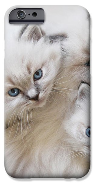 Baby Faces iPhone Case by Lori Deiter