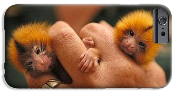 Fed Mixed Media iPhone Cases - Baby Finger Monkeys Brown Border iPhone Case by L Brown