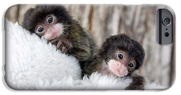 Fed Mixed Media iPhone Cases - Baby Finger Monkeys Grey Border iPhone Case by L Brown