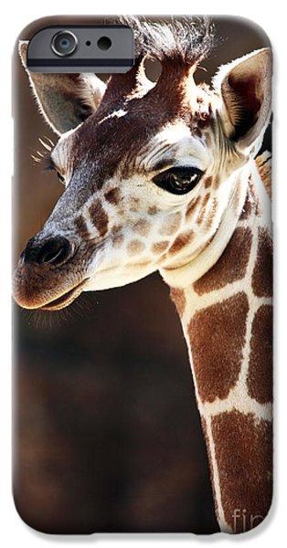 Wildlife Photographer iPhone Cases - Baby Giraffe iPhone Case by John Rizzuto
