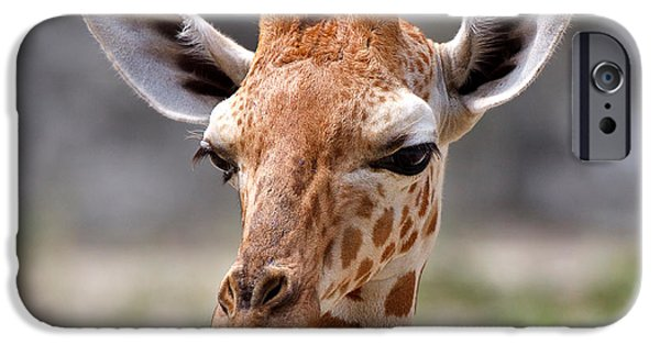 Cute. Sweet iPhone Cases - Baby Giraffe iPhone Case by Louise Heusinkveld
