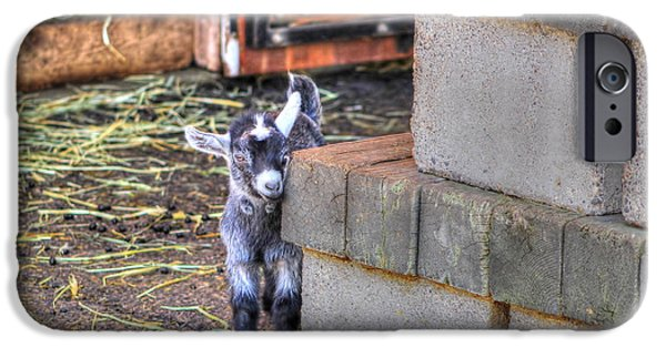 Animal Cards iPhone Cases - Baby Goat iPhone Case by Jimmy Ostgard