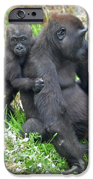 Bonding iPhone Cases - Baby Gorilla Holding onto His Mommy iPhone Case by Jim Fitzpatrick