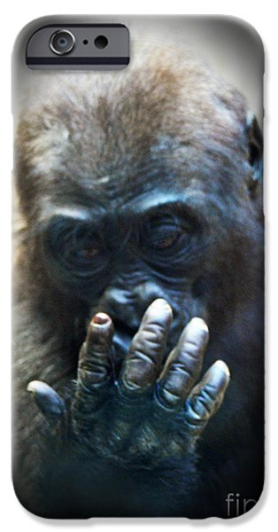 Bonding iPhone Cases - Baby Gorilla Studying His Hand iPhone Case by Jim Fitzpatrick