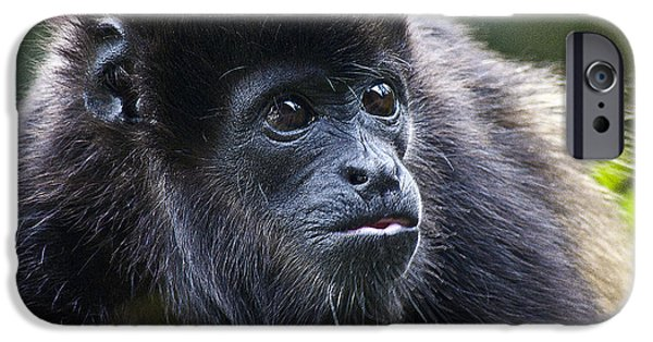Biologic iPhone Cases - Baby Howler Monkey  iPhone Case by Heiko Koehrer-Wagner