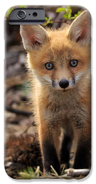 Fox Kit iPhone Cases - Baby in the Wild iPhone Case by Everet Regal