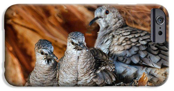 Haybale iPhone Cases - Baby Inca Doves iPhone Case by Robert Bales