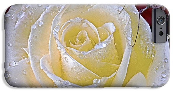 Cut-outs iPhone Cases - Baby Indian Rose Mantis Taking A Walk On A White Rose iPhone Case by Leslie Crotty