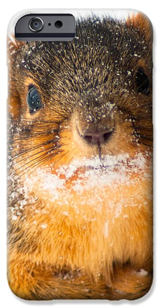 Baby it's cold outside iPhone Case by Optical Playground By MP Ray