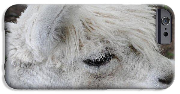 Llama iPhone Cases - Baby Llama iPhone Case by Ellen Henneke
