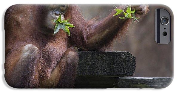 Fury iPhone Cases - Baby Orangutan - Houston Zoo iPhone Case by TN Fairey
