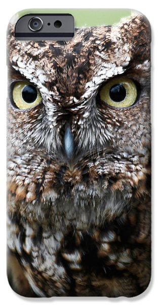 Pen And Ink Photographs iPhone Cases - Baby Owl Eyes iPhone Case by Athena Mckinzie