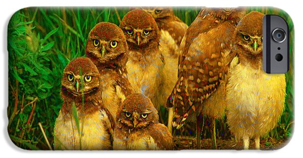 Owl iPhone Cases - Baby Owls iPhone Case by Marvin Blaine