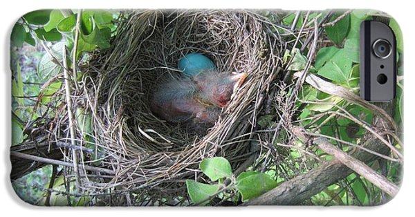 Baby Bird iPhone Cases - Baby Robin 2 iPhone Case by Brenda Swonger
